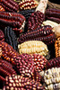 m332, Fig 7.5 ears of corn of different colors<br /> Choice 6 of 8