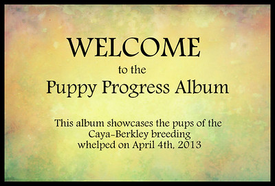 Puppy parents, you may upload as many photos and/or video of your pups as you like.  I have had comments about how great it is to see the other pups already, so please upload.  If you don't put dates on the photos, then make a comments on that photo of the date and any info you want about it.  OR you can email me the info and I can put it under the photo in the caption area for you.  THANKS AGAIN for letting us see how things are going.