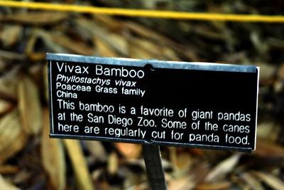 7/7/09 Signage for Vivax Bamboo (Phyllostachys vivax). Bamboo Garden. Quail Botanical Gardens, Encinitas, San Diego County, CA