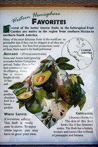 7/7/09 Subtropical Fruit Garden, Quail Botanical Gardens, Encinitas, San Diego County, CA
