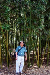 7/7/09 Gilbo in a grove of Vivax Bamboo (Phyllostachys vivax) - China. Bamboo Garden. Quail Botanical Gardens, Encinitas, San Diego County, CA