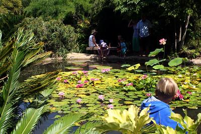 7/7/09 Bamboo Pond @Bamboo Garden. Quail Botanical Gardens, Encinitas, San Diego County, CA