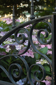 Gate and Hydrangas