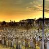 Calvary Cemetery, Queens