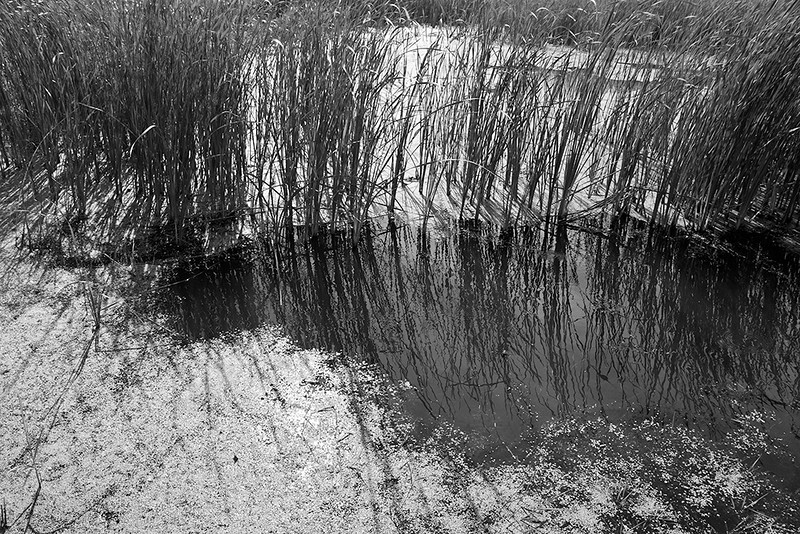 Quiet Waters 1<br /> ©2011 Peter Aldrich