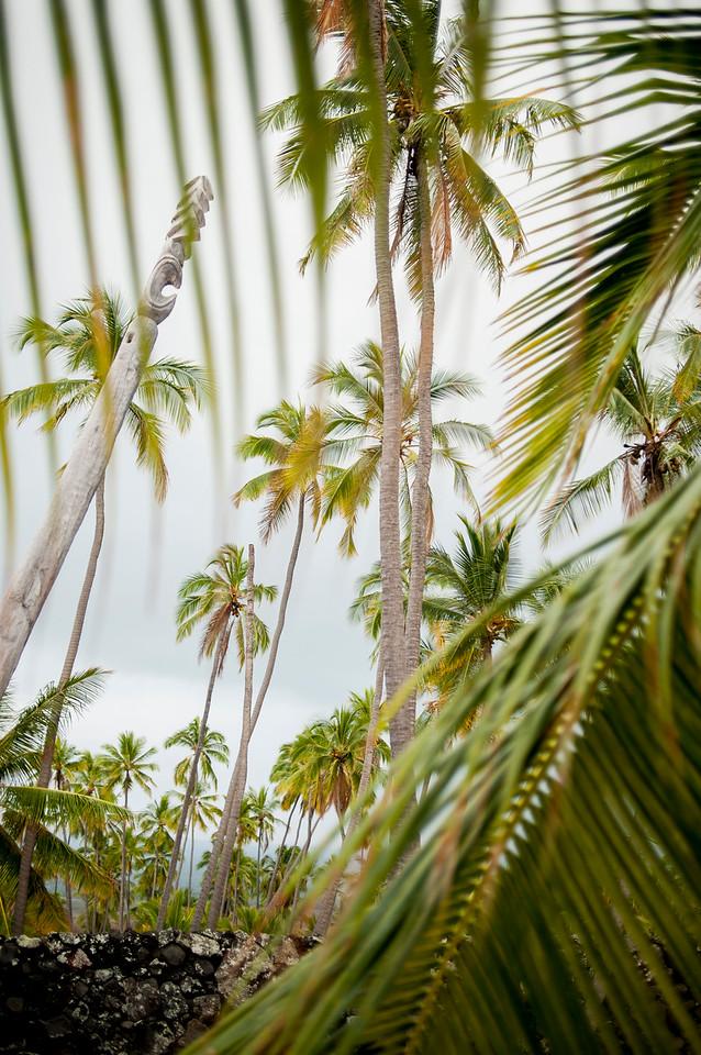 Hawaii_Spelman-33