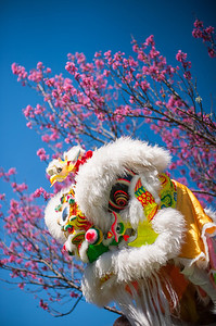 Waimea Cherry Festival