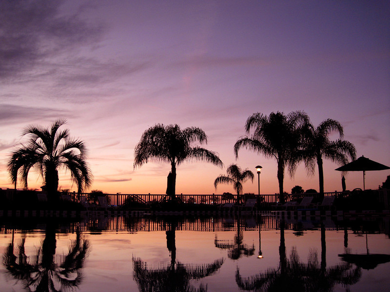 Florida palm trees rendered as silhouettes by a gorgeous sunset.