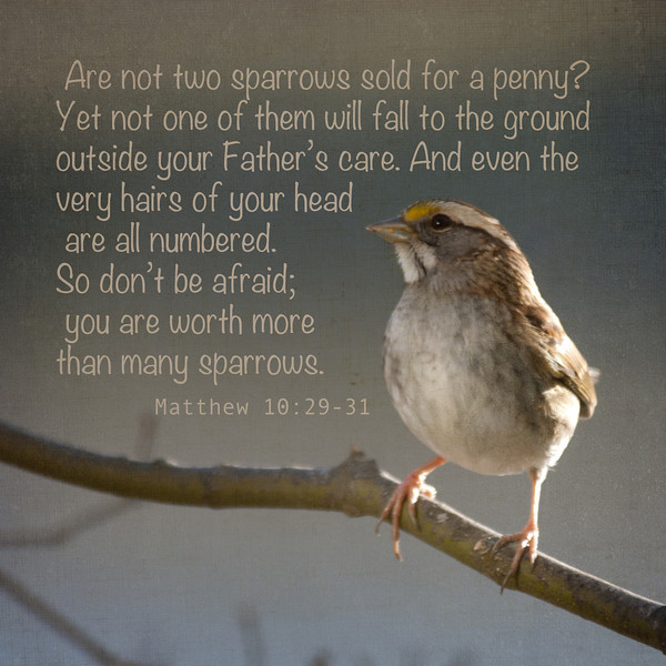 Quotes And Bible Verses 1. Read More. Sparrow   Matthew 10: 29 31
