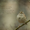 For His eye is on the sparrow