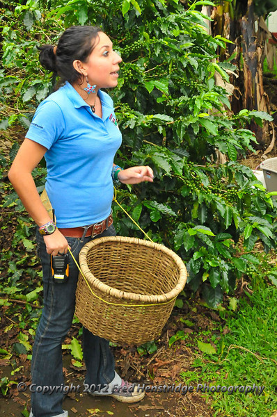 This basket will hold 25 lbs of coffee beans when full,