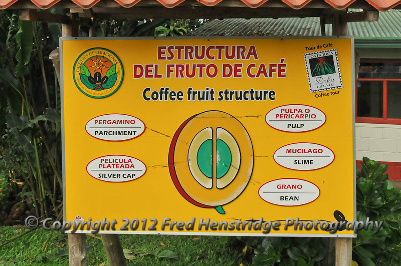 Coffee fruit structure