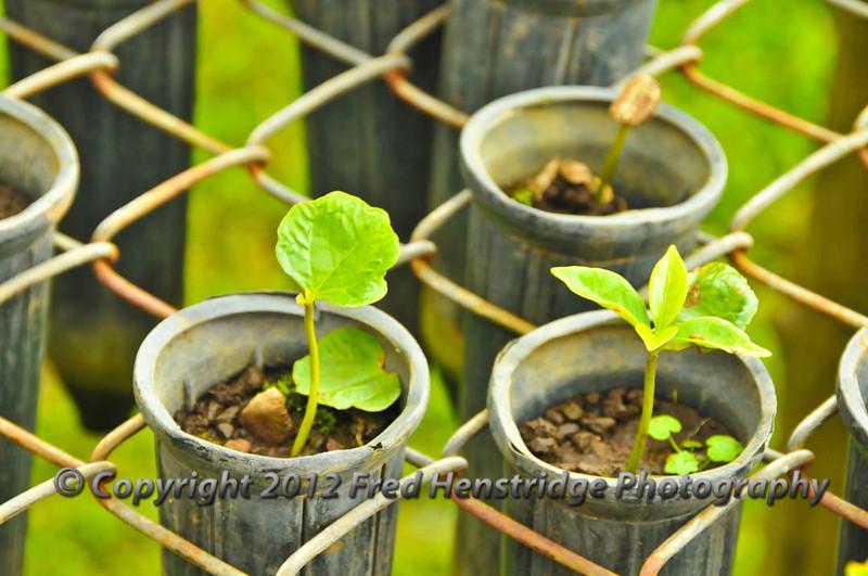 New coffee plants