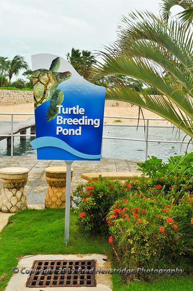 The turtle farm