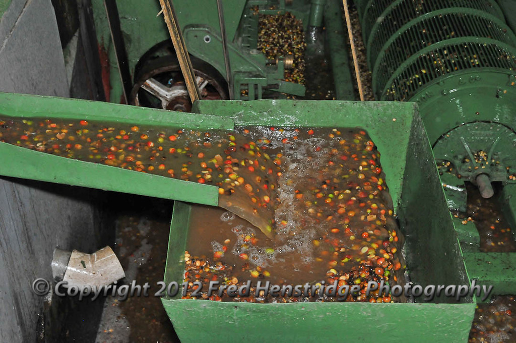Sorting the processed beans