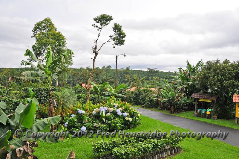 Doka Estates coffee plantation