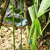 Veel mooie vogeltjes in de tuin