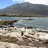 Pinguin kolonie - Betty's Bay