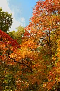 Oct 23_NJPalisades Trees Autumn_0107