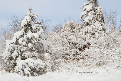 Feb 9_Snowfall DeKorte Park NJ_4708