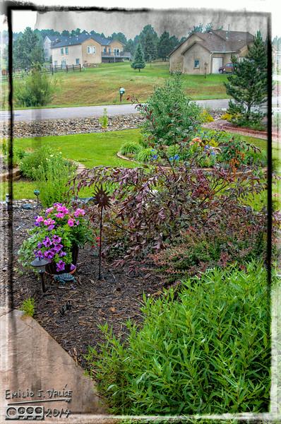 2014 Flowers, Rainy Day,