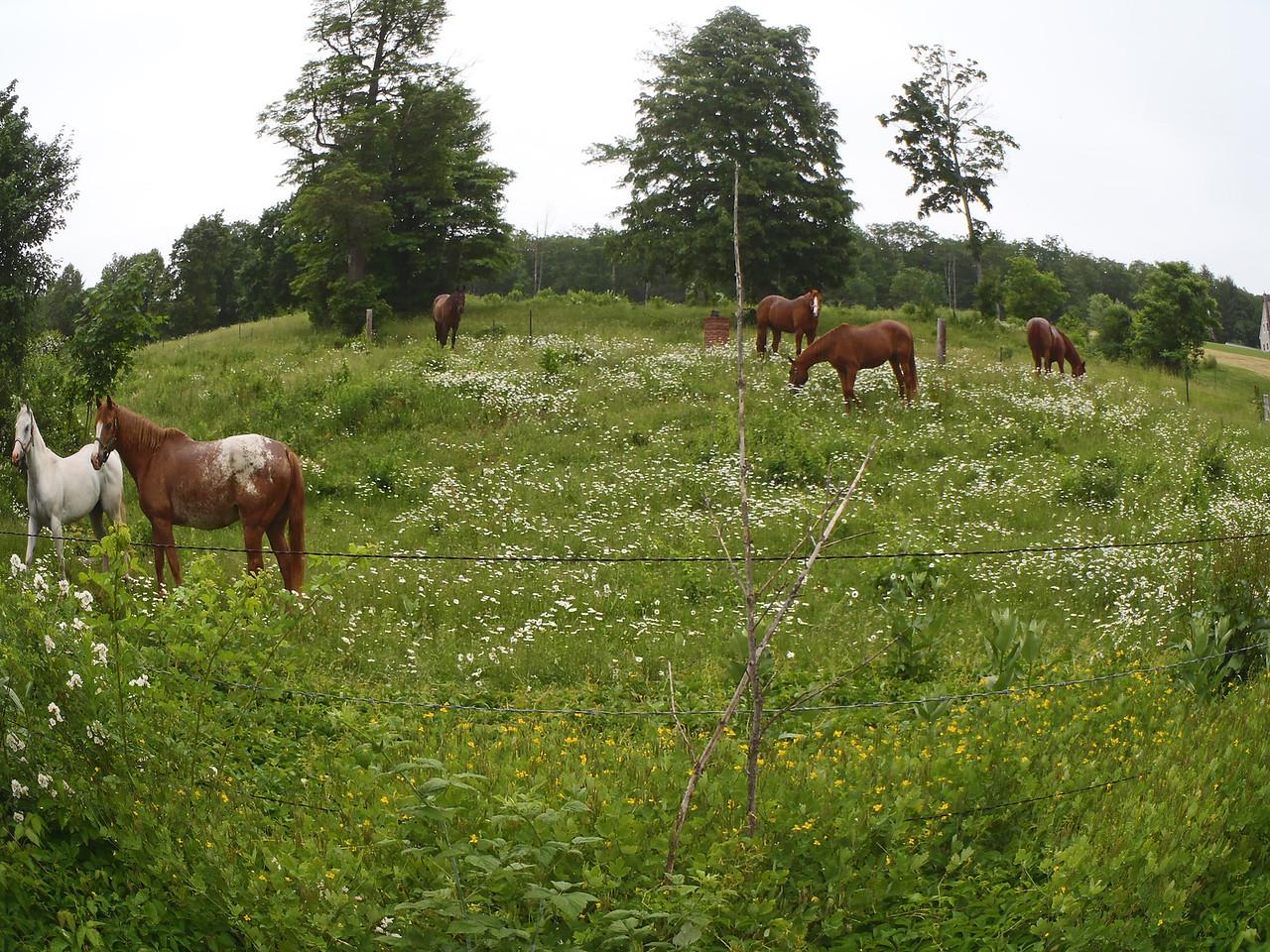 Horse Farm above Lake Massabesic on the way to paddling Squam Lake