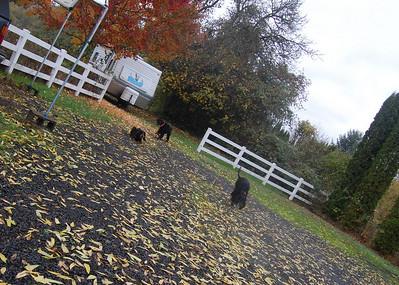Rainy Fall Day -- Nov 2010