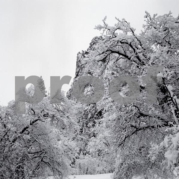 yosem-trees