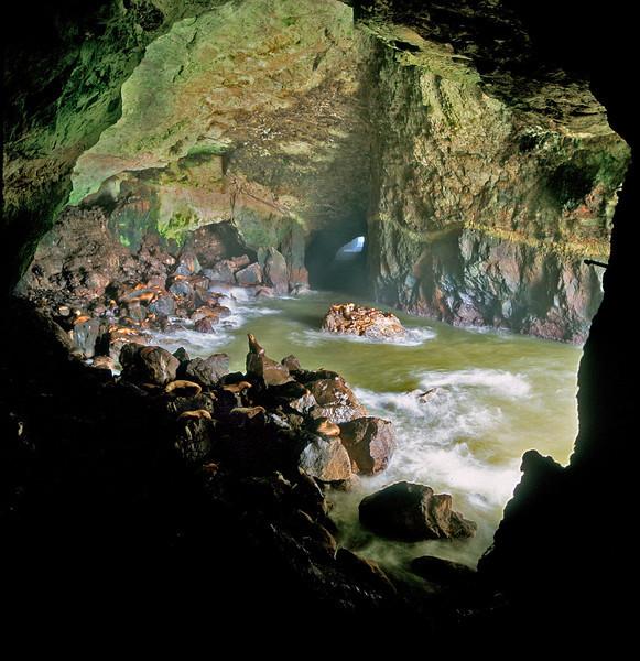 seal-cave ©Raymond Marlow