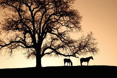 Ranch '11