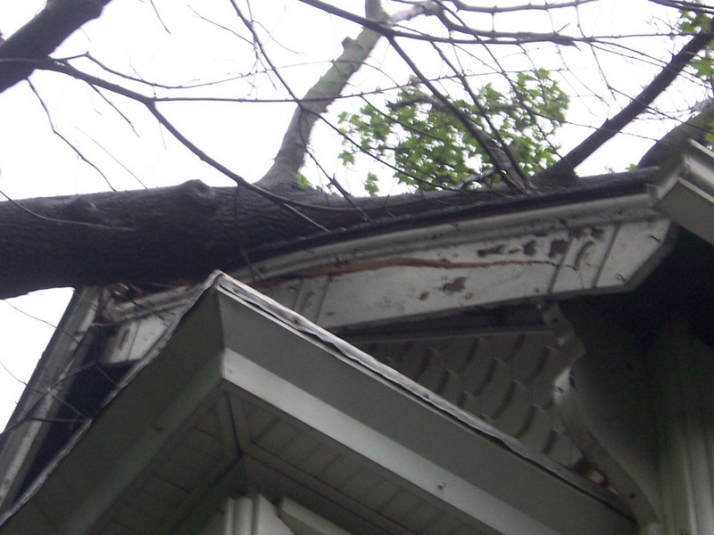 Dude, a tree broke our house. (June 2008)
