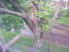 Dude, a tree broke our house.(June 2008)