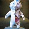 Anatomy 101, dough-boy style.