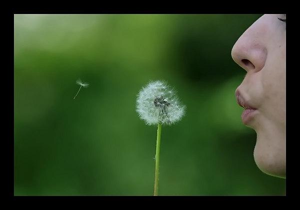 One Wish - My Backyard, NJ.
