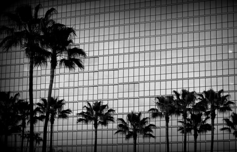 Evening silhouette of trees against hotel face in Long Beach, CA