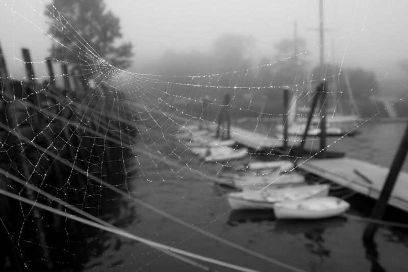 Spiderweb and Docks