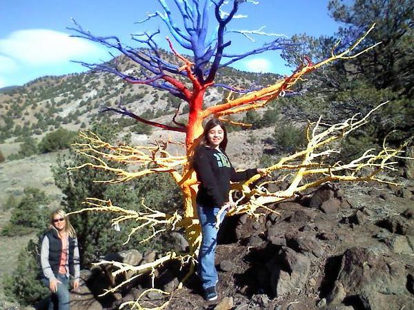 mckinley hippie tree