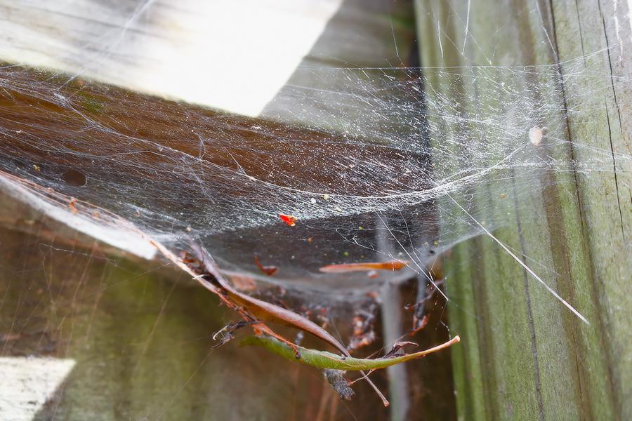 Spider%20Web%202.jpg