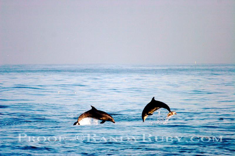 Double Dipper Flipper~<br /> 3-30-11