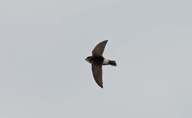 Little Swift 3 New Brighton, Wirral, June 2012