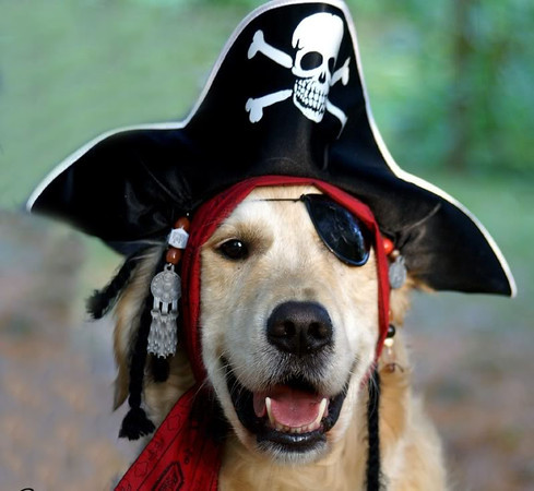 """Arrrrrr...a """"sea dog"""" for Halloween: General Lee, my Golden """"Receiver.""""<br /> <br /> Photographer's Name: J.R. Rosencrans<br /> Photographer's City and State: Alexandria, Ind."""
