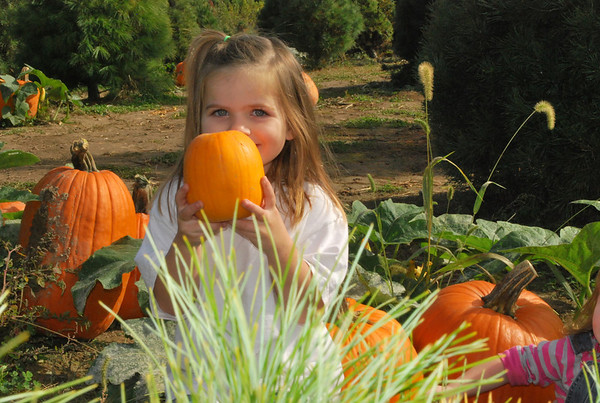 Playing in the pumpkin patch.<br /> <br /> Photographer's Name: Jenee Wilber<br /> Photographer's City and State: Anderson, Ind.