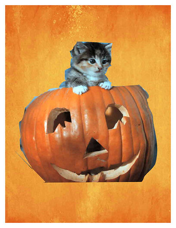 Meow fit in the pumpkin<br /> <br /> Photographer's Name: Wanda Smith<br /> Photographer's City and State: Chesterfield, Ind.
