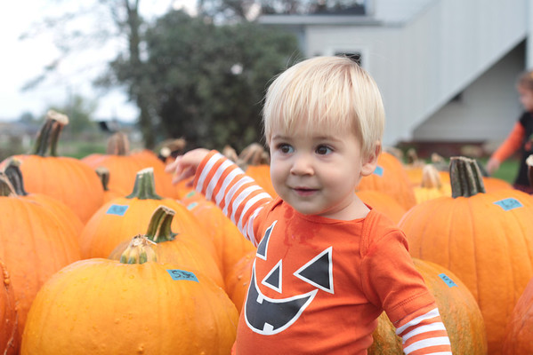 My grandson, Clayton Adams of Huntertown, Ind., found just the right pumpkin for him!<br /> <br /> Photographer's Name: Diana Adams<br /> Photographer's City and State: Frankton, Ind.