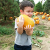 Kristian Buttler at Stoney Creek Farm picking out his pumpkin.<br /> <br /> Photographer's Name: Jill Neff<br /> Photographer's City and State: Anderson, Ind.