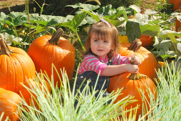 Rayna picking her pumpkin.<br /> <br /> Photographer's Name: Jenee Wilber<br /> Photographer's City and State: Anderson, Ind.