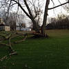 Tree down in backyard on the Edgewood Golf Course<br /> <br /> Photographer's Name: Tyler Prater<br /> Photographer's City and State: Anderson, Ind.