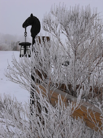 """Hoar frost,"" taken at my farm in Richland Township.<br /> <br /> Photographer's Name: J.R. Rosencrans<br /> Photographer's City and State: Alexandria, Ind."