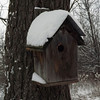 Cold weather shelter, taken at my farm in Richland Township<br /> <br /> Photographer's Name: J.R.  Rosencrans<br /> Photographer's City and State: Alexandria, Ind.