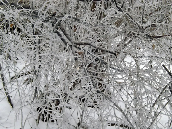 Hoore frost in Richland Township.<br /> <br /> Photographer's Name: J.R. Rosencrans<br /> Photographer's City and State: Alexandria, Ind.